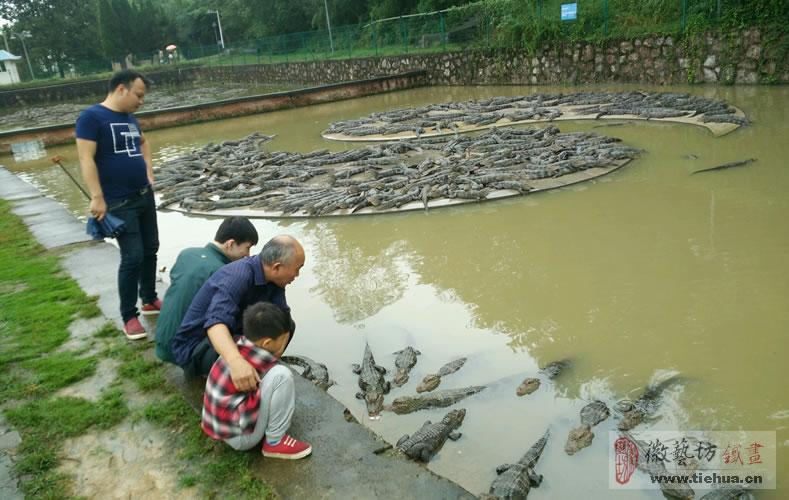 中国鳄鱼湖芜湖铁画7